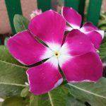 نمونه عکس دوربین گوشی هواوی Honor 20